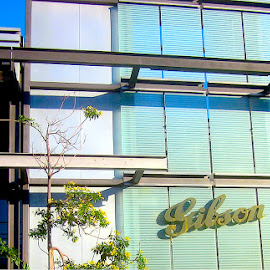 Gibson Guitars Head Office, LA by Ronnie Caplan - Buildings & Architecture Office Buildings & Hotels ( vertical, logo, windows, office building, leaves, shadows, sign, sky, blue, horizontal, los angeles, trees, lines, shade, branches )