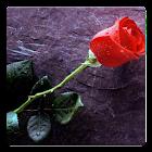 Flower Photos! icon