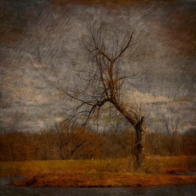 Wicked Branches by Bill Tiepelman - Digital Art Things ( sharp, tree, moody, dead tree, branches )