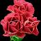 Roses_7.jpg