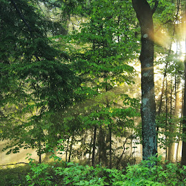 Rays of Hope by Nathan Porath - Backgrounds Nature ( wisconsin, foggy, tree, fog, sunrays, trees, forest, sunrise, misty, mist, vertical lines, pwc,  )