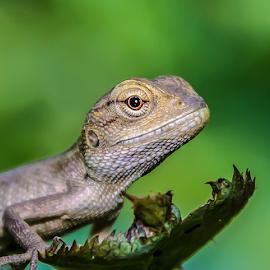 by Anshul Tiwari - Animals Reptiles