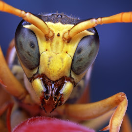 UFO by Ondrej Pakan - Animals Insects & Spiders ( macro, wasp, bug, insect, strawberry )