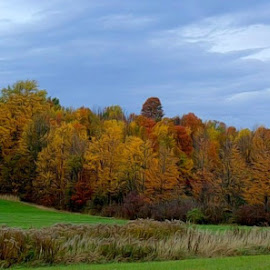 Color Line by DeDe PalmerWells - Landscapes Prairies, Meadows & Fields ( fall colors, colorful, autumn, trees, leaves,  )