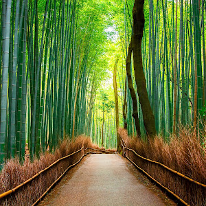 Bamboo Forests of Kyoto no WM.jpg