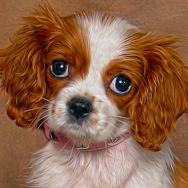 Richie Schwartz  Photography  Cavalier King Charles Spaniel by Richard Markus - Animals - Dogs Portraits ( cavalier, dog head shot, dog, portrait, king charles spaniel )