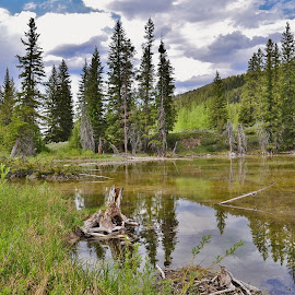 Beaver pond by Don Evjen - Landscapes Waterscapes ( clouds, pines, montana, beaver, pond )