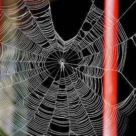 Web World by Anoop Namboothiri - Nature Up Close Webs ( abstract, pattern, anoop namboothiri, pillar, web, spider, net,  )