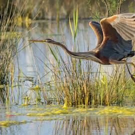 by Massimo Mosca - Animals Birds