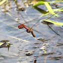 Drafonfly