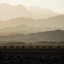 Camel Train by   BG - Landscapes Travel ( mountains, danakil, sunset, camels, africa, ethiopia )