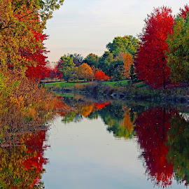 Fall in Chicago by Anthony Goldman - Landscapes Forests ( reflection, nature, autumn, chicago, landscape,  )