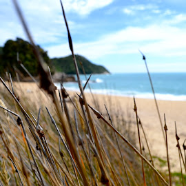 Windy days by Alex Fylypovych - Landscapes Beaches ( sand, grass, waves, calming, beach, relaxing, rocks, new zealand, hiking )