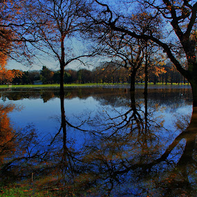 Hagley Park  by Tim Bennett - City,  Street & Park  City Parks ( christchurch, hagley park, new zealand )