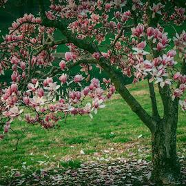 by Amanda Malabad - Nature Up Close Trees & Bushes