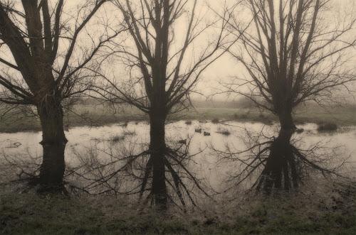 <p> Trio of Trees, Bodiam Castle <em>©JamieGriffiths 2014</em></p>