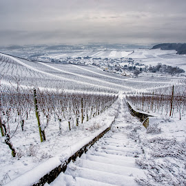 Wine area by Pascal Hubert - Landscapes Prairies, Meadows & Fields ( moselle snow wine luxembourg )