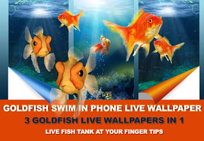 Screenshot of Goldfish Swim In Phone LWP