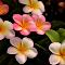Pink Frangipani 112.jpg