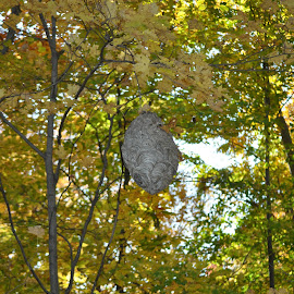 by Wendy Schultz - Nature Up Close Hives & Nests