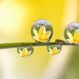 Morning Dews by Sofyan Ian - Nature Up Close Natural Waterdrops ( #natural#amazing#beutiful#wonderful )