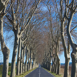 The Open Road by Paul Atkinson - Landscapes Travel ( tree, france, symmetry, scenic, transportation, travel, road, rural )