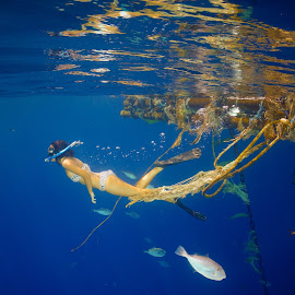 Snorkeling in the open sea. by Alexandre Ribeiro Dos Santos - Sports & Fitness Watersports ( girl, sumba, blue, indonesia, fishes, sea, snorkeling, nihiwatu, swimming,  )
