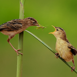Love & Care by Roy Husada - Animals Birds ( animals, feeding, birds )