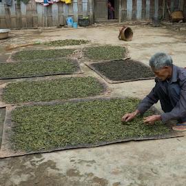 tea leaves  by John Htet - Food & Drink Alcohol & Drinks ( myanmar, drink, leaves, tea, chinese )