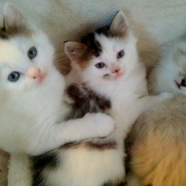 kittys in a row by Lyz Amer - Animals - Cats Kittens ( kittens,  )