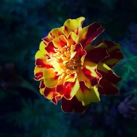 magic world by Emina Dedić - Instagram & Mobile Other ( home, joy, green, beautiful, dark background, yellow, fantastic, yellow flower, love, fantasy, magic, red, magical, background, dark, lovely, garden, flower, world,  )