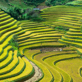 Rice Terraces by Dong Bui - Landscapes Mountains & Hills ( rice terraces, trocphunc )