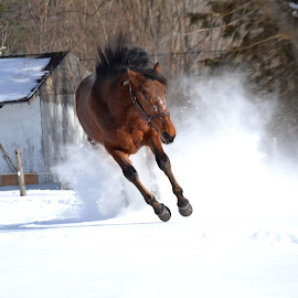 by Kirsi Bertolini - Animals Horses
