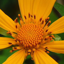 by Renjith S Rajan - Nature Up Close Gardens & Produce