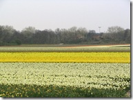 Tulip Fields 04-08 07
