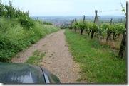 i - Alsace - Mittelwiher wine visit 04