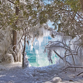 Lake Ice  by John Kehoe - Nature Up Close Trees & Bushes ( michigan, ice storm, tree, ice, icicles, lake,  )