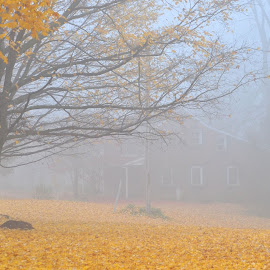 Foggy morning by Jocelyne Phillips - Landscapes Weather