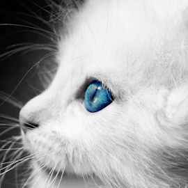 by Горан Ѓоровски - Animals - Cats Portraits (  )