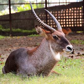 by Subir Biswas - Animals Other Mammals