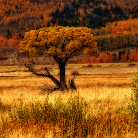 Fall In Colorado by Terry Ricks - Nature Up Close Trees & Bushes ( tree, trees.fall.fall coloras.autumn, south park colorado, rocky mountains, colorado, autumn colors, fall in colorado )