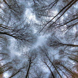 Fisheye upside-down by Sandro Ortolani - Nature Up Close Trees & Bushes ( fisheye, hdr, nature, trees, luxembourg,  )