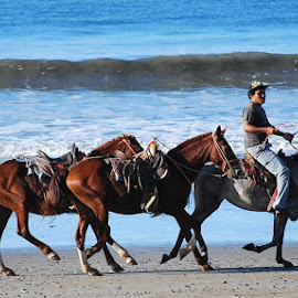 beach gallop by Ant Tony Gregory - Animals Horses ( gallop, horses, ocean, beach )