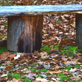 Bench of Wood by Linda Blevins - Artistic Objects Furniture ( bench, wood, home made )