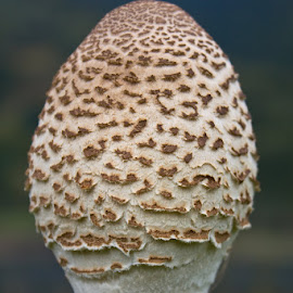 Oblio by Tipa Marius - Nature Up Close Mushrooms & Fungi