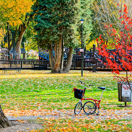 Waiting While She Walks by Barbara Brock - City,  Street & Park  City Parks ( bike, autumn leaves, foldable bicycle, city park )