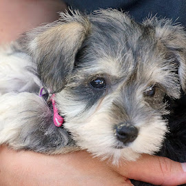 Beautiful Belle by Gordon Court - Animals - Dogs Puppies