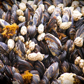 muscles by Susan Consiglio Shurtleff - Nature Up Close Other Natural Objects