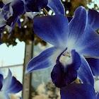 Orchids Live Wallpaper icon