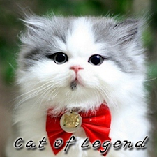 Cat Of Legend